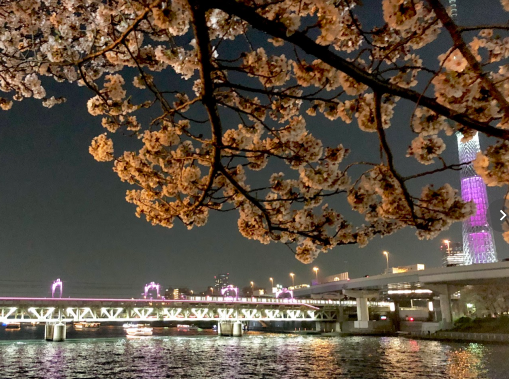 東武鉄道 隅田川橋梁「サクラトレイン」を運転します!